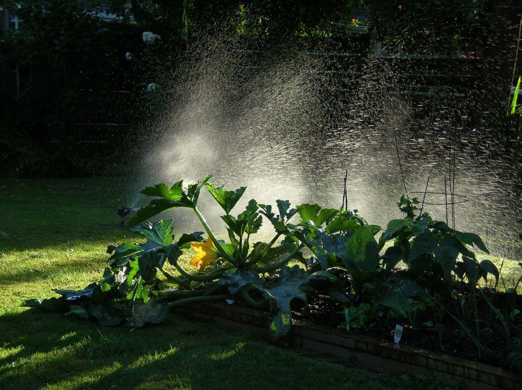 garden-2006_0723.JPG