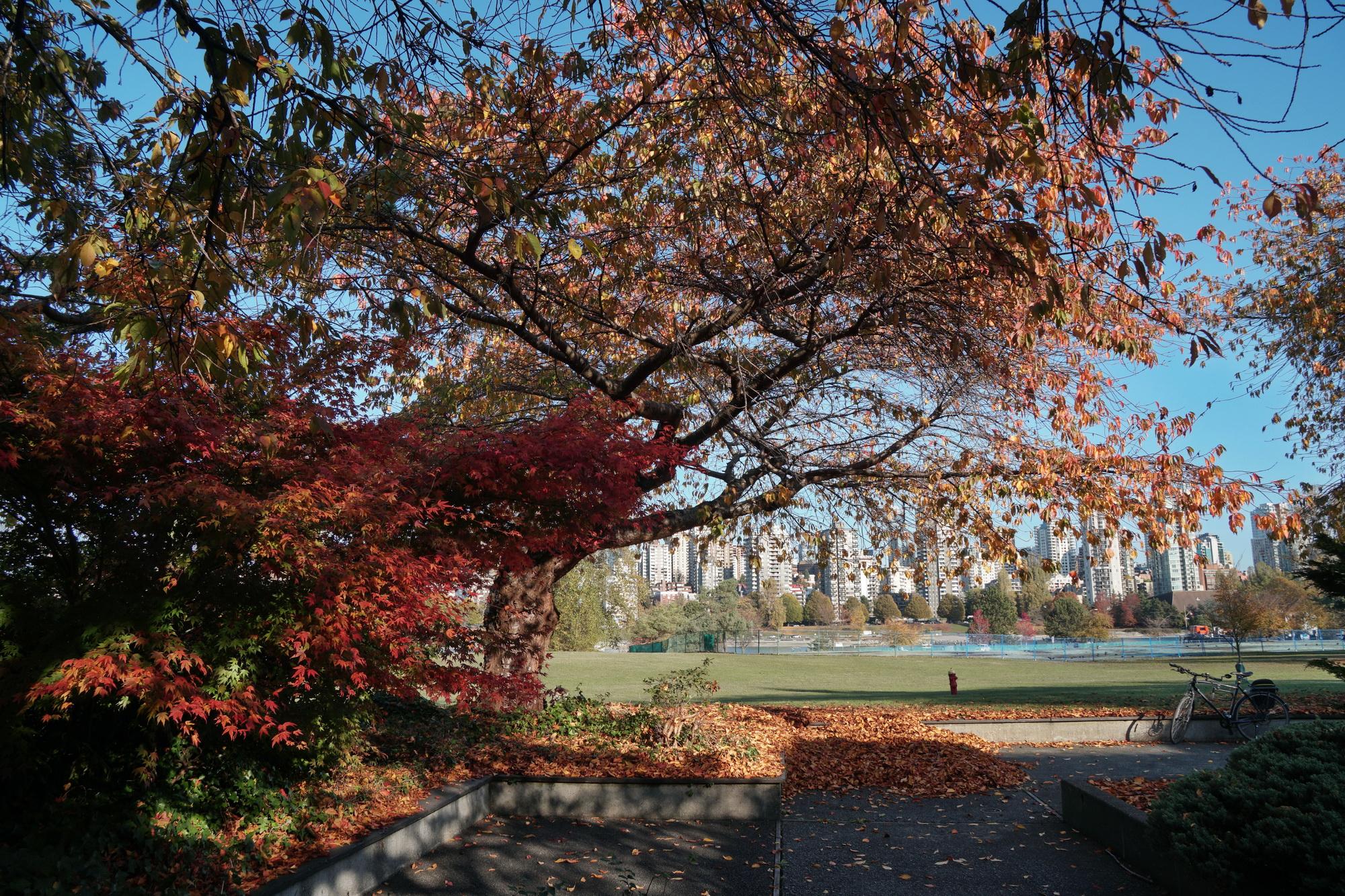 Vanier.Park.Nov.2017.2