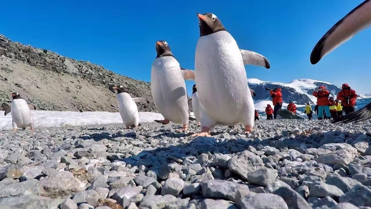 2.3春节南极游成为中国游客新宠20有人14天花费8万元.jpg