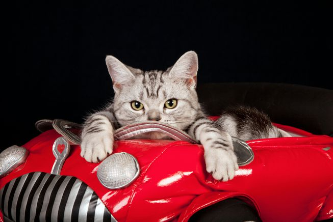 """Featured image for """"Friday File Feline: Japan's Traffic Safety Video Catapulting in Popularity"""""""