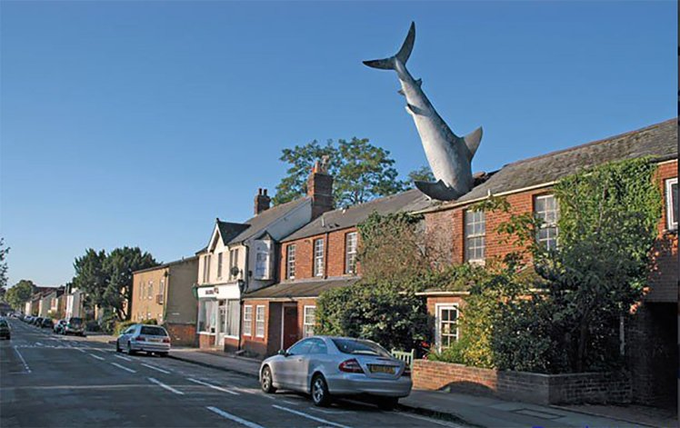 GREAT WHITE SHARK IN OXFORD ROOF MAY BECOME A LISTED MONUMENT
