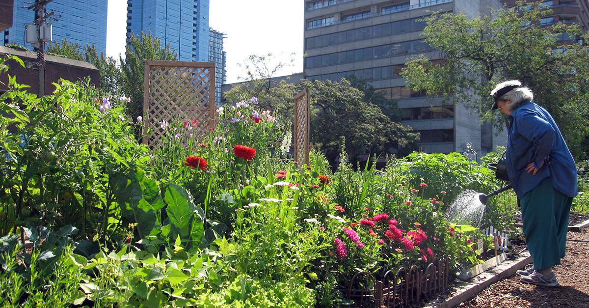 Davie-Street-community-garden-facebook-size
