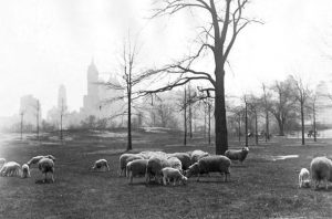 """Featured image for """"When once there were sheep in the meadow …"""""""