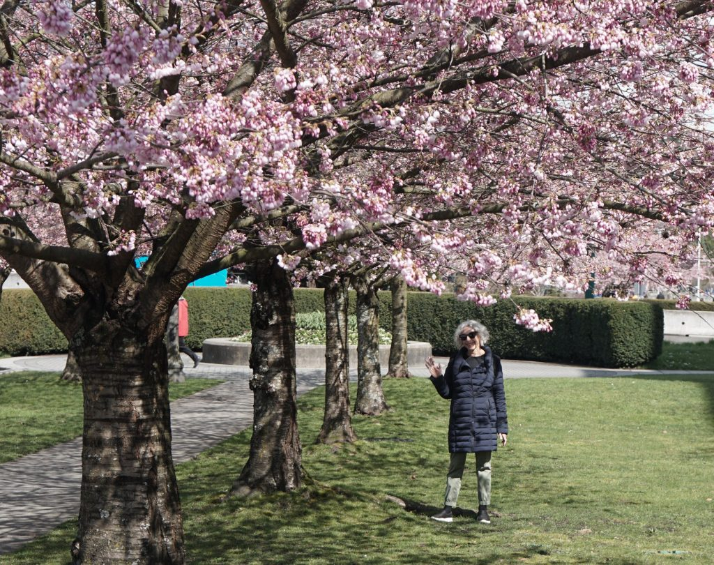 """Featured image for """"Cherry Blossom Time in Vancouver"""""""