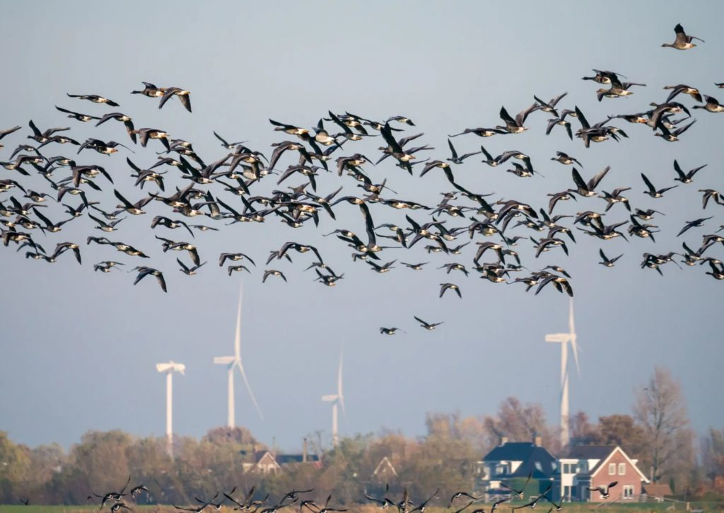 """Featured image for """"Wind Turbine Bird Mortality Lessened by 72% with this Simple Fix"""""""