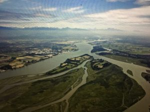 """Featured image for """"Fraser River Estuary & Its Diverse Species Extinct in our Lifetime?"""""""