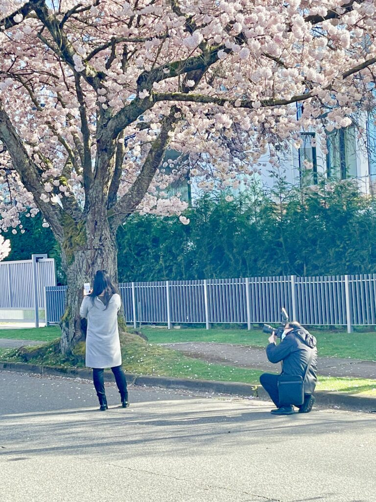 """Featured image for """"Cherry Blossom Time in Pandemic Vancouver"""""""