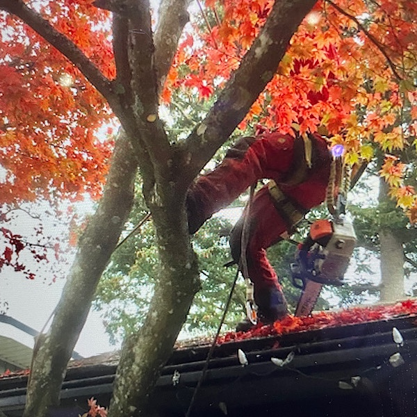 """Featured image for """"Vancouver Cutting Trees for Quicker Development Processes, Axing Tree Retention for Development Expediency?"""""""